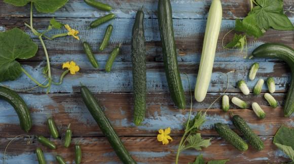 Nem todos os pepinos são longos e verdes. Conheça as diferentes variedades.
